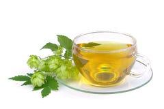 Herbaciany chmiel 02 Zdjęcie Royalty Free