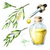 Herbaciany drzewny istotnego oleju set Lecznicza i kosmetyki ro?lina, akwareli r?ka rysuj?ca ilustracja odizolowywaj?ca na bia?ym ilustracja wektor