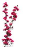 herbaciany drzewo Fotografia Royalty Free