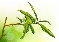 herbaciany drzewo Obraz Stock