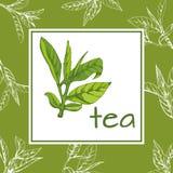 Herbaciany loga wektor, tło z pociągany ręcznie liśćmi i gałąź herbata, Obraz Royalty Free