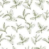 Herbaciany loga wektor, tło z pociągany ręcznie liśćmi i gałąź herbata, Zdjęcia Royalty Free