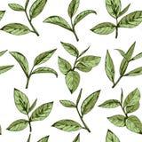 Herbaciany loga wektor, tło z pociągany ręcznie liśćmi i gałąź herbata, Fotografia Royalty Free