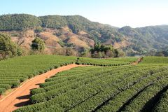 Herbaciany ogród w Tajlandia Obrazy Stock