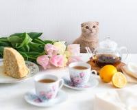 Herbaciany przyjęcie z kotem Domowej roboty tort, cytryna, teapot i tulipany na tle, kosmos kopii Macierzysty ` s dnia pojęcie obraz stock