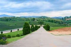 Herbaciany rolnej drogi niebieskie niebo Obraz Stock