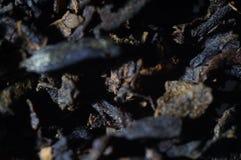 Herbaciany tekstury tło zamknięty kwiatu komarnicy macro target4726_0_ zamknięty obraz royalty free
