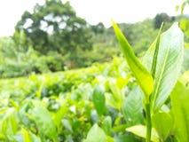 Herbaciany urlop Zdjęcia Stock