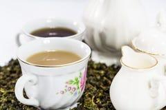 Herbaciany ustawiający na biały tle Obraz Royalty Free