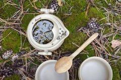 Herbaciany ustawiający na ziemi Zdjęcia Stock