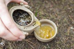 Herbaciany ustawiający na ziemi Zdjęcie Royalty Free