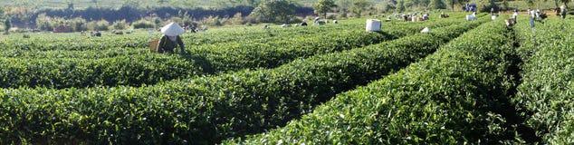 Herbaciany wzgórze Obrazy Stock