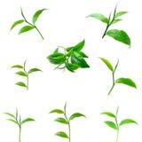 Herbacianych liści bielu tło zdjęcie stock