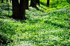 Herbage Royalty Free Stock Image