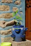 Herbage garnek Obrazy Royalty Free