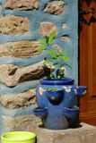 Herbage pot. Blue herbage pot in front of a light blue wall Royalty Free Stock Images