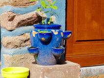 Herbage pot. Blue herbage pot in front of a light blue wall Royalty Free Stock Photos
