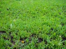 Herbaje verde rico fotos de archivo