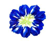 herbal fotografia stock