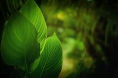 Herbal Stock Image