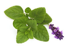 Herbal. Balm & lavender herbals over white background Royalty Free Stock Images