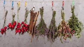 herbal photos libres de droits