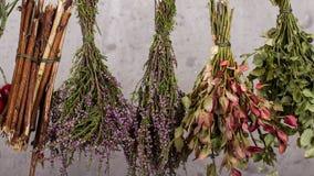 herbal photographie stock