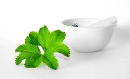 Herbal Stock Images
