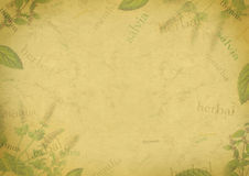 Herbal background on old paper. With the Latin names of medical plants royalty free illustration