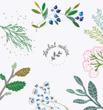 Herbal background for the organic medicine. Royalty Free Stock Image