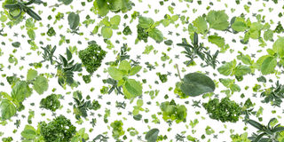 Herbal background (on white) Stock Photography