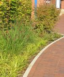 Herbal border on mulch. Herbal border with grasses on bark mulch stock photos