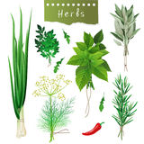 Herbal bunches Royalty Free Stock Photo