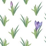 Herbal bushes and crocuses 1. Watercolor illustration. Hand-drawing. royalty free stock images