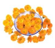 Herbal calendula Stock Photos