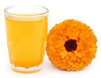Herbal calendula flower with extract in a glass Royalty Free Stock Photo
