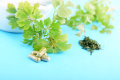 HERBAL CAPSULES CLOSE UP Royalty Free Stock Images