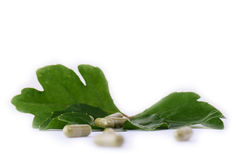 HERBAL CAPSULES WITH LEAF. On white background stock images
