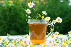 Herbal chamomile tea Royalty Free Stock Photos