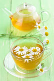 Herbal chamomile tea Stock Image