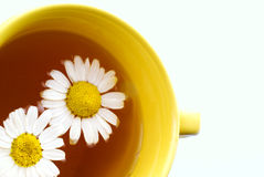 Herbal chamomile tea isolated on  background Royalty Free Stock Photos