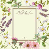 Herbal colorful frame Royalty Free Stock Image