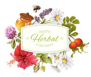 Herbal cosmetics banner. Vector herbal cosmetics banner with honey, rose hip and hibiscus flower on white background. Design for herbal cosmetics, grocery Royalty Free Stock Photography