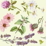 Herbal cosmetics basket Royalty Free Stock Photography