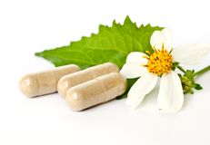 Herbal Drug. Stock Photography