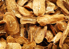 Herbal , dry burdock root Stock Images