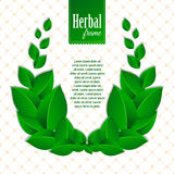 Herbal eco wreath of natural green leaves. Eco friendly background Stock Images