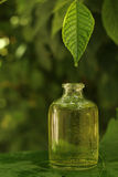Herbal essence. Herbal green essence drop bottle Stock Photography