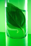 Herbal essences. Mint in glass on green background Stock Photo