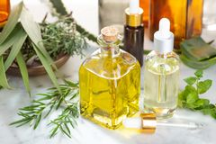 Herbal essential oil. Rosemary oil, eucalyptus oil, aloe vera, pepermint and fir oil royalty free stock images